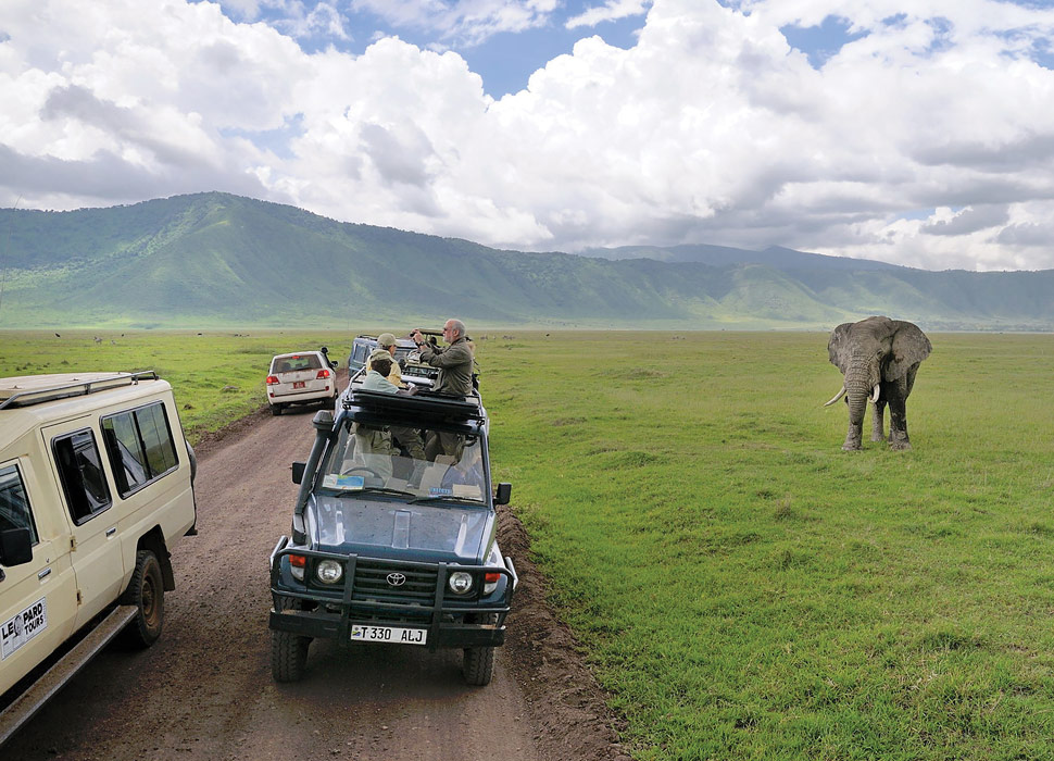 safari-tourism-elephant